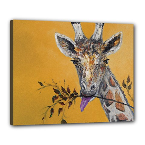 Giraffe Treat Canvas 20  x 16  (Framed) by rokinronda