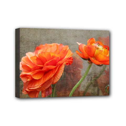 Orange Rose From Bud To Bloom Mini Canvas 7  X 5  (framed) by NaturesSol