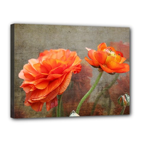 Orange Rose From Bud To Bloom Canvas 16  X 12  (framed)
