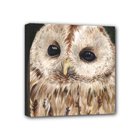 Tawny Owl Mini Canvas 4  X 4  (framed) by TonyaButcher