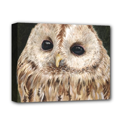 Tawny Owl Deluxe Canvas 14  X 11  (framed) by TonyaButcher