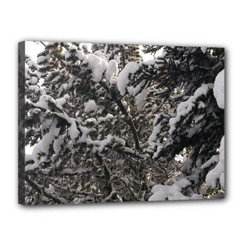 Snowy Trees Canvas 16  X 12  (framed) by DmitrysTravels