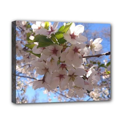 Sakura Canvas 10  X 8  (framed)