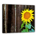 Sunflower - Canvas 24  x 20  (Stretched)