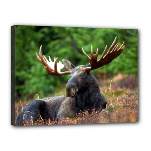 Majestic Moose Canvas 16  X 12  (framed) by StuffOrSomething