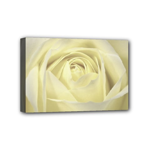 Cream Rose Mini Canvas 6  X 4  (framed) by Colorfulart23
