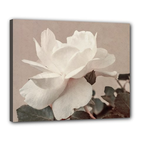 White Rose Vintage Style Photo In Ocher Colors Canvas 20  X 16  (framed) by dflcprints