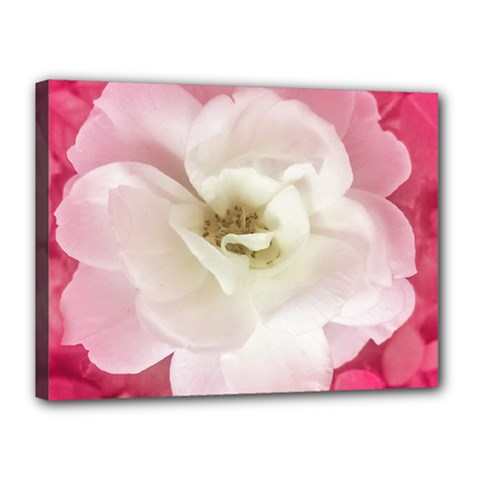 White Rose With Pink Leaves Around  Canvas 16  X 12  (framed) by dflcprints