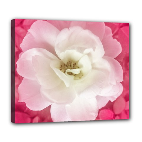 White Rose With Pink Leaves Around  Deluxe Canvas 24  X 20  (framed) by dflcprints