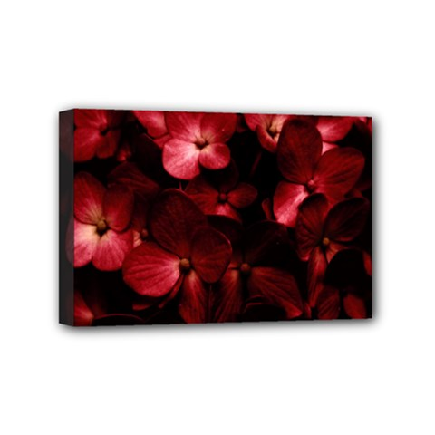 Red Flowers Bouquet In Black Background Photography Mini Canvas 6  X 4  (framed) by dflcprints