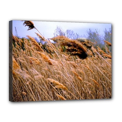 Blowing Prairie Grass Canvas 16  X 12  (framed) by bloomingvinedesign