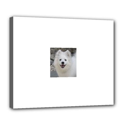 American Eskimo Dog Deluxe Canvas 24  x 20  (Framed) by TailWags