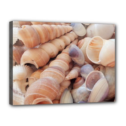 Sea Shells Canvas 16  X 12  (framed) by yoursparklingshop