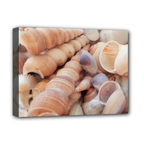 Sea Shells Deluxe Canvas 16  X 12  (framed)  by yoursparklingshop