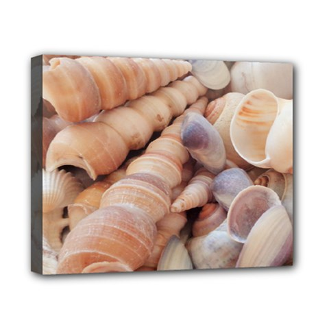 Sea Shells Canvas 10  X 8  (framed) by yoursparklingshop
