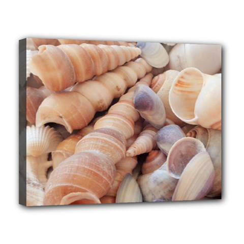 Sea Shells Canvas 14  X 11  (framed) by yoursparklingshop