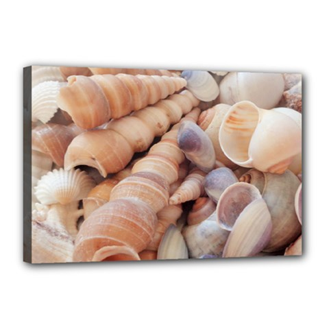 Sea Shells Canvas 18  X 12  (framed) by yoursparklingshop