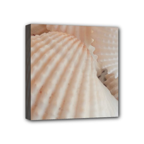Sunny White Seashells Mini Canvas 4  X 4  (framed) by yoursparklingshop
