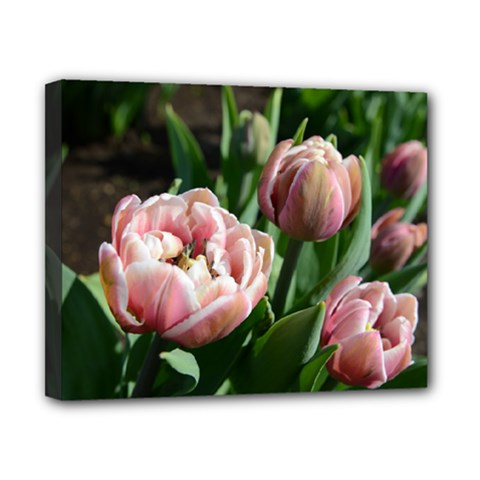 Tulips Canvas 10  X 8  (framed) by anstey