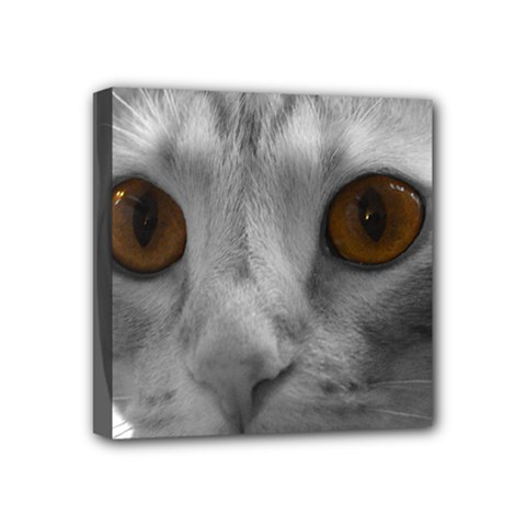 Funny Cat Mini Canvas 4  x 4  by timelessartoncanvas