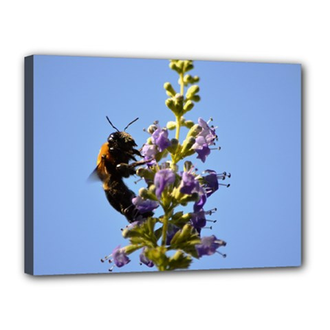 Bumble Bee 1 Canvas 16  X 12  by timelessartoncanvas