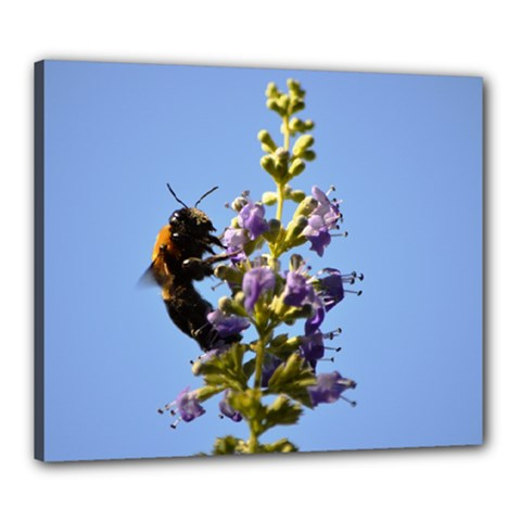 Bumble Bee 1 Canvas 24  X 20  by timelessartoncanvas