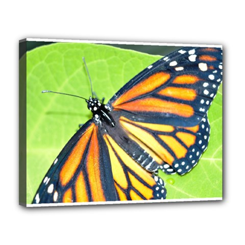 Butterfly 2 Canvas 14  X 11  by timelessartoncanvas