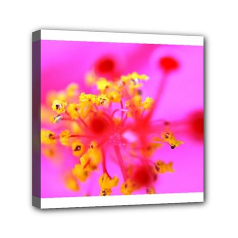 Bright Pink Hibiscus 2 Mini Canvas 6  X 6  by timelessartoncanvas