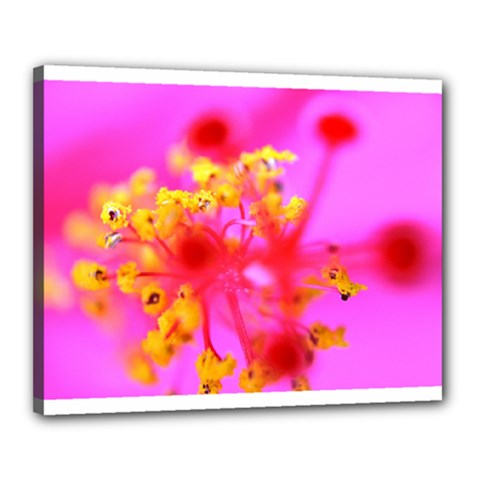Bright Pink Hibiscus 2 Canvas 20  X 16  by timelessartoncanvas