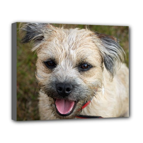 Border Terrier Deluxe Canvas 20  x 16   by TailWags