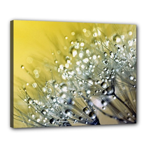 Dandelion 2015 0713 Canvas 20  X 16  by JAMFoto