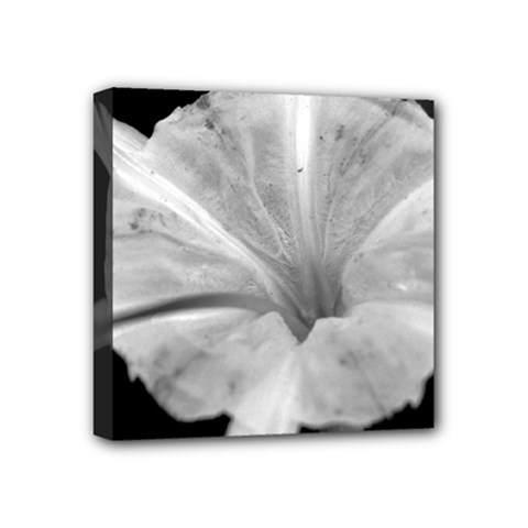 Exotic Black And White Flower 2 Mini Canvas 4  X 4  by timelessartoncanvas