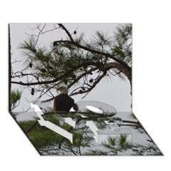 Bald Eagle 3 Love Bottom 3d Greeting Card (7x5)