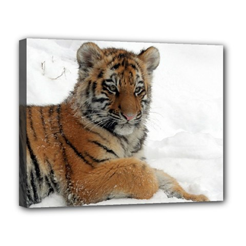 Tiger 2015 0102 Canvas 14  X 11  by JAMFoto