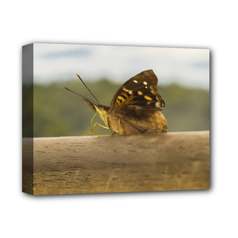 Butterfly Against Blur Background At Iguazu Park Deluxe Canvas 14  X 11  by dflcprints