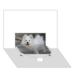 American Eskimo Dog Full Heart Bottom 3D Greeting Card (7x5)