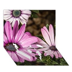 Beautiful Colourful African Daisies  Love Bottom 3d Greeting Card (7x5)
