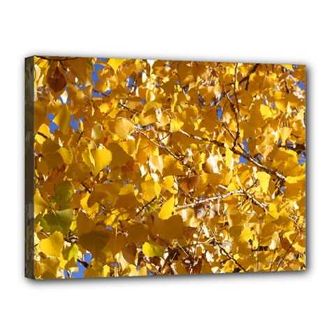 Yellow Leaves Canvas 16  X 12  by trendistuff