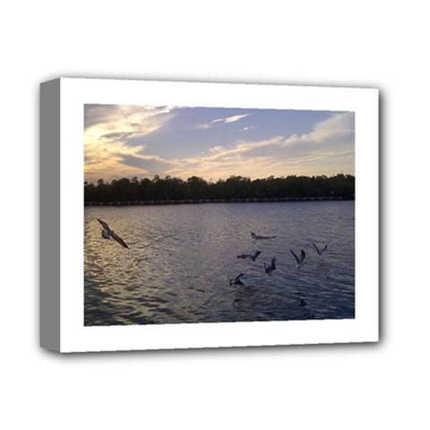 Intercoastal Seagulls 3 Deluxe Canvas 14  X 11  by Jamboo