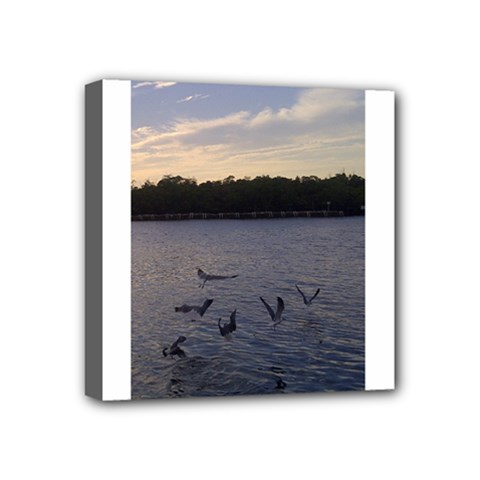Intercoastal Seagulls 3 Mini Canvas 4  x 4  by Jamboo