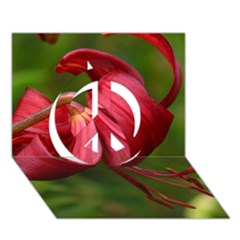 Lilium Red Velvet Peace Sign 3d Greeting Card (7x5)  by trendistuff