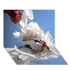 Apricot Blossoms Heart Bottom 3d Greeting Card (7x5)