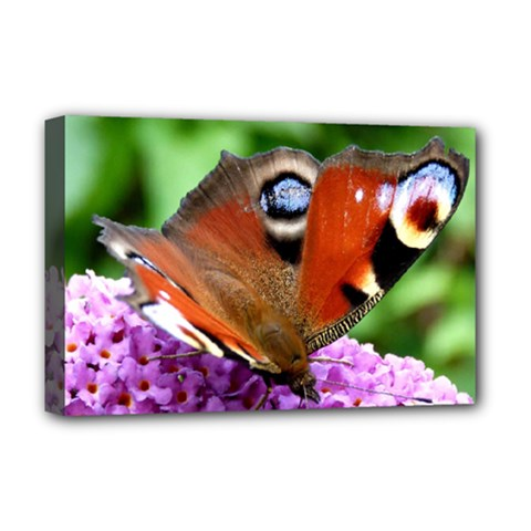 Peacock Butterfly Deluxe Canvas 18  X 12   by trendistuff