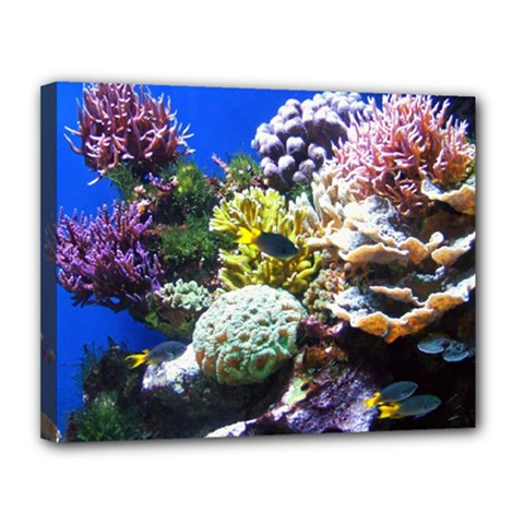 Coral Outcrop 1 Canvas 14  X 11  by trendistuff