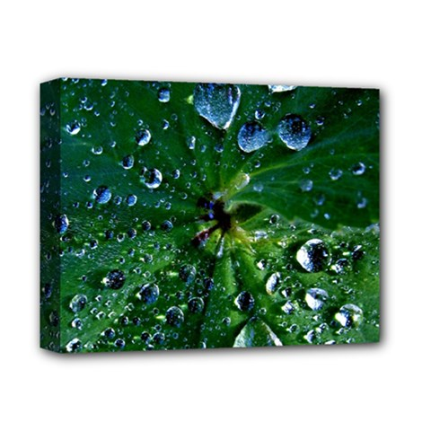 Morning Dew Deluxe Canvas 14  X 11  by Costasonlineshop