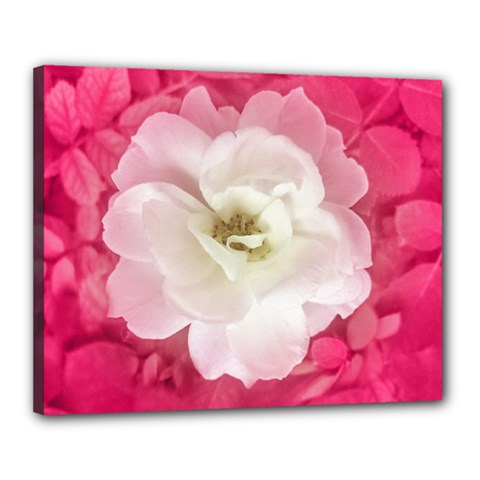 White Rose Canvas 20  X 16  by dflcprints