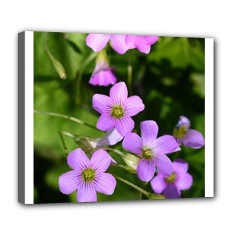 Little Purple Flowers Deluxe Canvas 24  X 20   by timelessartoncanvas