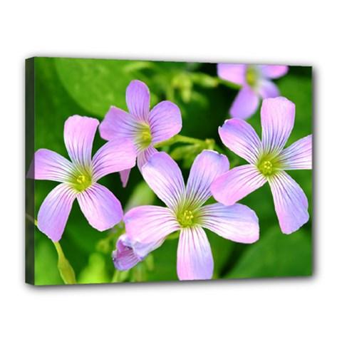 Little Purple Flowers 2 Canvas 16  X 12  by timelessartoncanvas