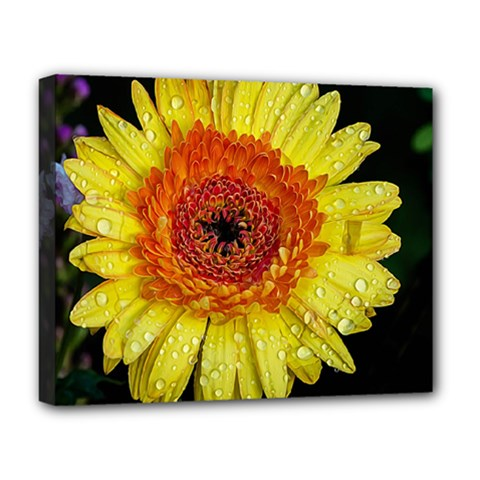 Yellow Flower Close Up Deluxe Canvas 20  X 16   by MichaelMoriartyPhotography