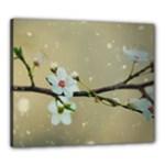 Cherry Blossom Canvas 24  x 20  (Framed)